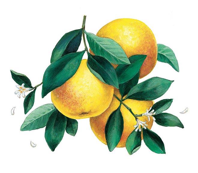 Acrylic_Grapefruit_660