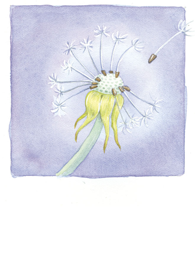 Watercolor_Dandilion_660