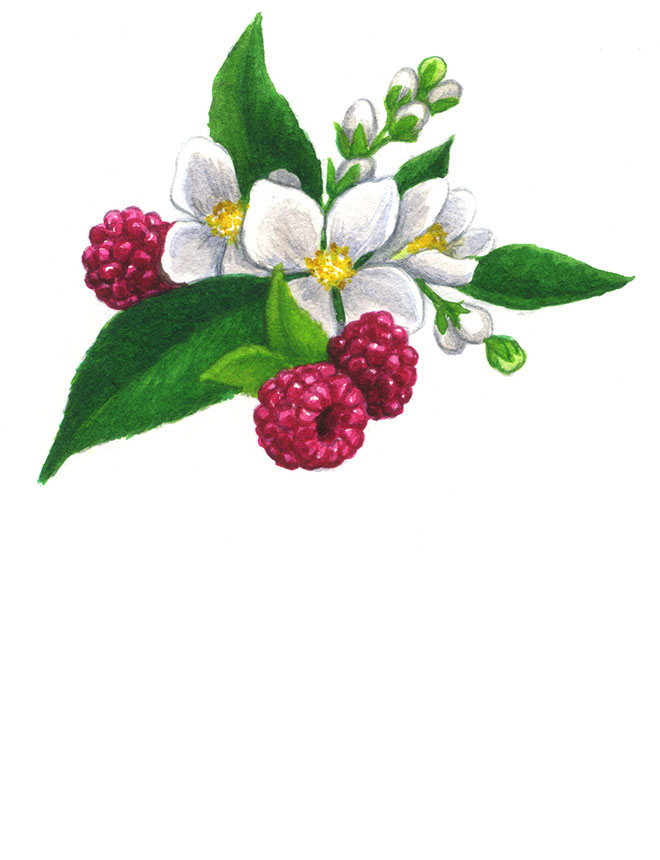 Watercolor_Raspberry-jasmine_660