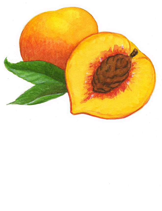 Watercolor_peach_660